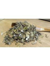 plantas medicinales para cistitis