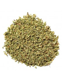 orégano planta medicinal
