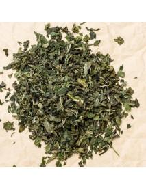 ortiga hierba medicinal