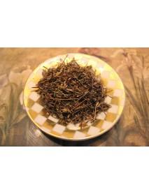eufrasia planta medicinal