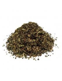 albahaca planta medicinal