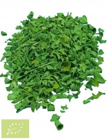planta medicinal moringa