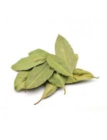 laurel planta