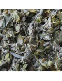 té griego planta