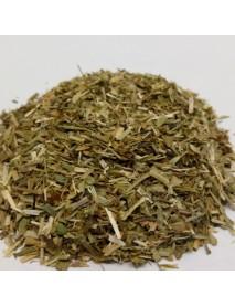 bolsa de pastor planta medicinal
