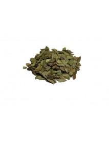 gayuba uva de oso planta medicinal