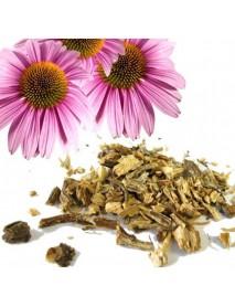 equinacea planta medicinal