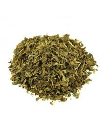 hierbabuena planta medicinal