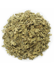 hierba luisa planta medicinal