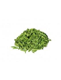 stevia planta medicinal