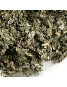 frambuesa planta medicinal