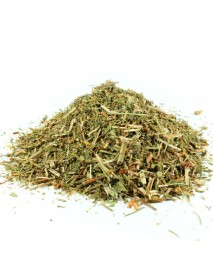 hierba de san juan planta medicinal