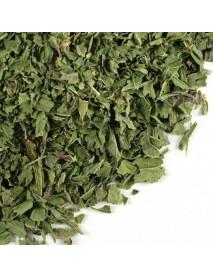 ortiga  planta mediconal