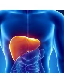 hierbas medicinales curativas para el hígado