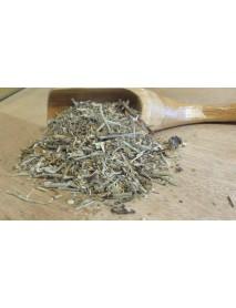 plantas medicinales para lumbalgia